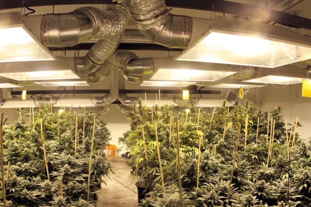 The 21 best growroom tips and tricks from pros high times Grow room designs